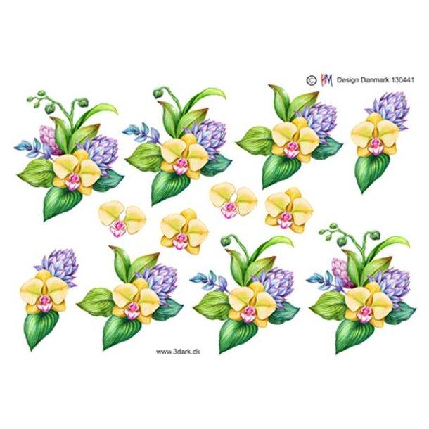 Gul orkide