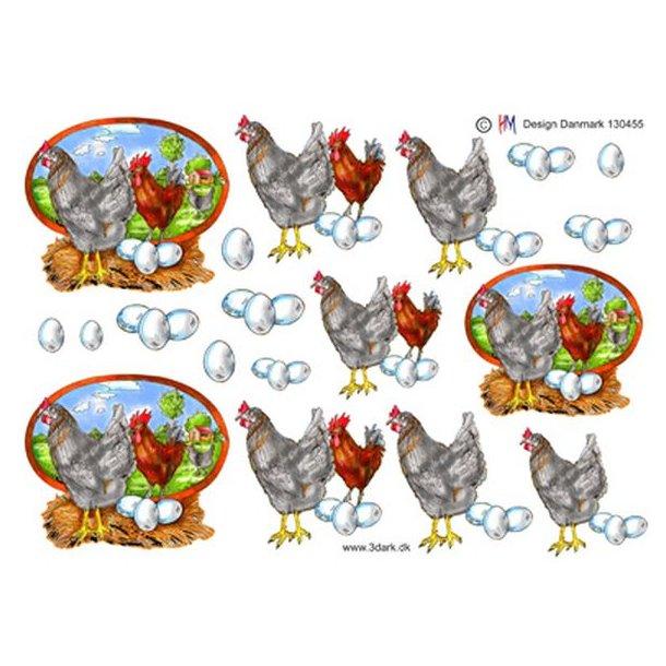 Hane, høne & æg